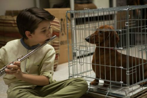 Wiener-Dog-Movie